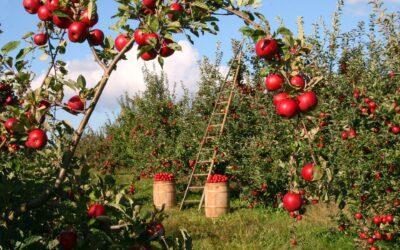 Å leve et liv i fruktbarhet 11.2